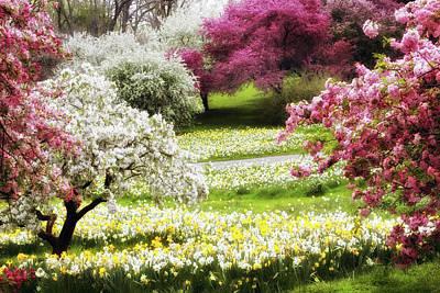 Daffodils Digital Art - Divine Daffodils by Jessica Jenney