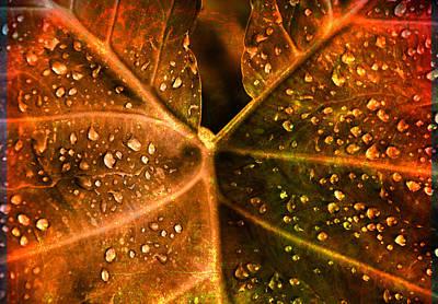A Lot Photograph - Dew Drops by Susanne Van Hulst