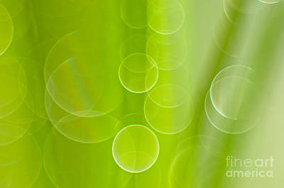 Nature Abstracts Photograph - Dewdrops by Silke Magino