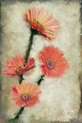 Photograph - Dewy Muted Zinnias by Lois Bryan