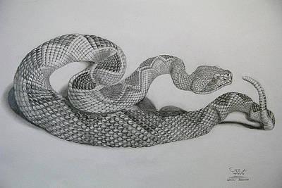 Diamondback Drawing - Diamondback by Dennis Tolentino