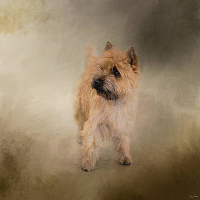 Cairn Terrier Photograph - Did I Hear You Say Walk - Cairn Terrier by Jai Johnson