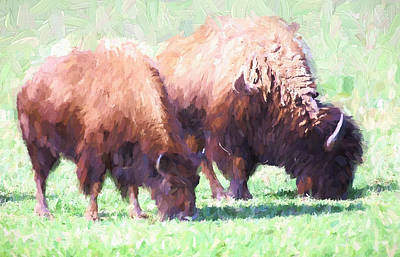 Digital Painting Two Bison Original by Linda Phelps