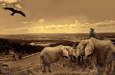 Wildlife Landscape Photograph - Dignified Rank by Lourry Legarde