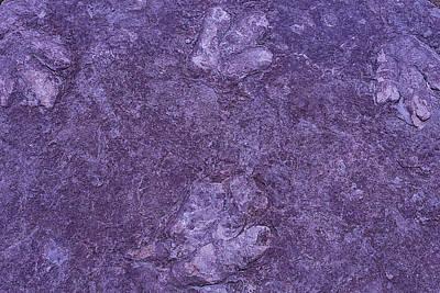Dinosaur Tracks Print by Garry Gay