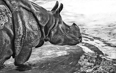 One Horned Rhino Photograph - Dip In The Pool by Jamie Pham