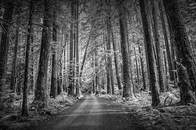 Dirt Road Through A Rain Forest In Black And White Print by Randall Nyhof