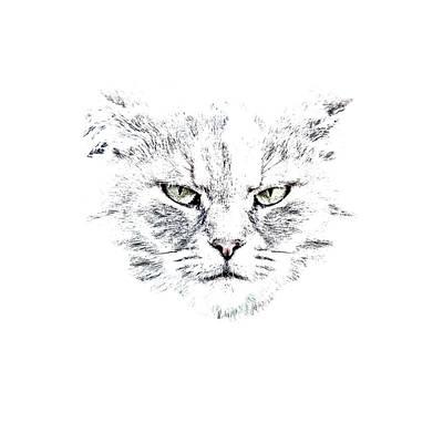 Regal Photograph - Disturbed Cat by Everet Regal