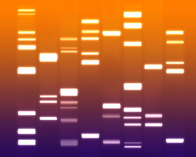 Dna Purple Orange Print by Michael Tompsett
