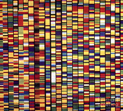 Dna Sequencer Print by Science Source