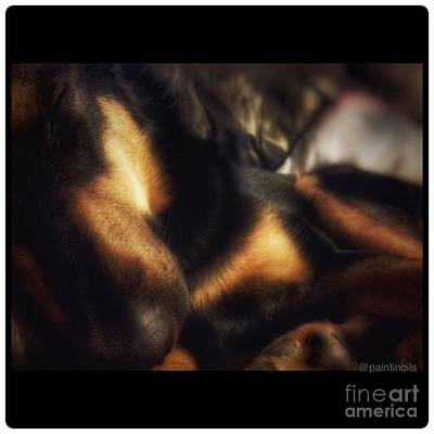Dog Photograph - Do Not Disturb. #dogs  #gsd by Isabella Abbie Shores
