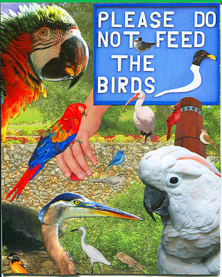 Cockatoo Mixed Media - Do Not Feed The Birds by Donna Vanscoy
