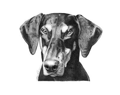 Pet Portraits Drawing - Doberman by Abbey Noelle