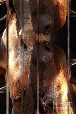 Breed Digital Art - Doberman Pincher by Liane Wright