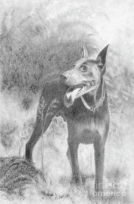 Doberman Drawing - Dobermann by Ralph Duncan