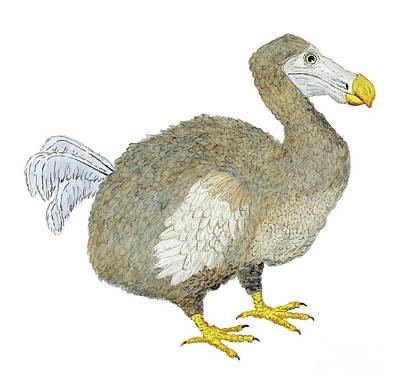 Dodo Bird Protrait Print by Thom Glace