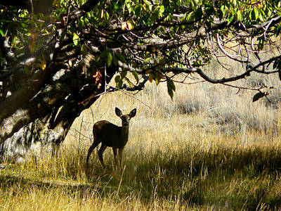 Wild Orchards Photograph - Doe In The Orchard by Lisa Knechtel