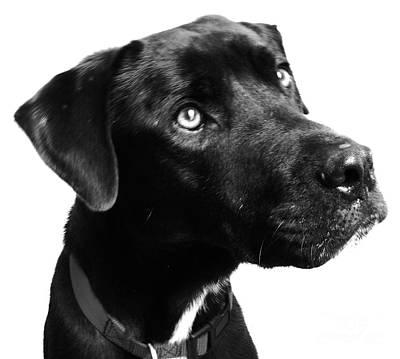 Black Dog Digital Art - Dog by Amanda Barcon