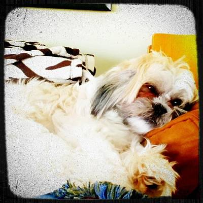 Warm Fuzzy Puppy Photograph - Dog Day Afternoon by Diala Tony