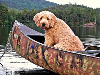 Dog Days Of Summer Original by Joy Nichols
