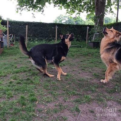 Dog Photograph - #dog #dogs #dogsrule #dogart #instadog by Isabella Abbie Shores