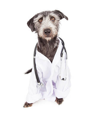 Dog Dressed As Veterinarian Print by Susan Schmitz
