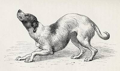 Friendly Drawing - Dog In A Humble And Affectionate Frame by Vintage Design Pics