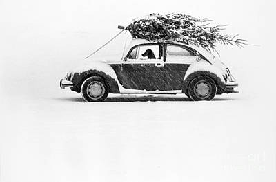 Dogs In Snow Photograph - Dog In Car  by Ulrike Welsch and Photo Researchers