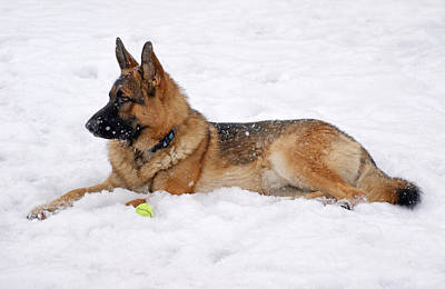 Dog In Snow Print by Sandy Keeton