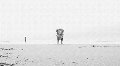 Dog In The Sand Original by Ralph Klein