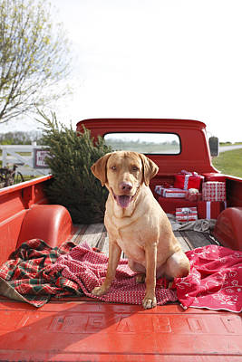 Dog In Truck Bed With Pine Tree Outdoors Print by Gillham Studios