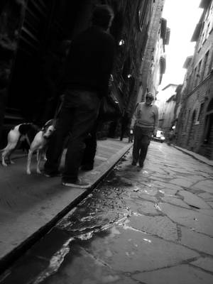 Greyhound Photograph - Dog by Obi Martinez
