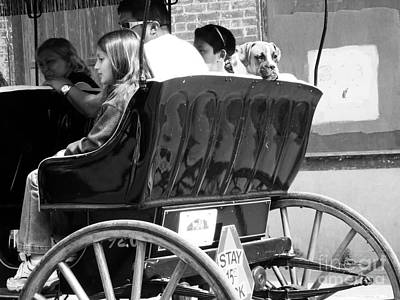 Dog On A Carriage Ride Print by Venus