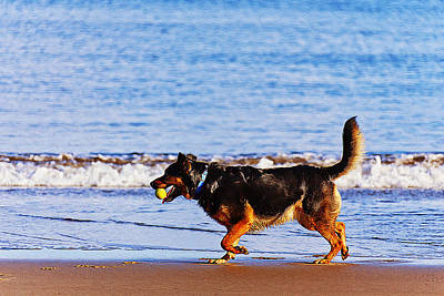 Dog On The Beach Print by Queso Espinosa