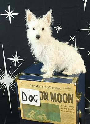 Photograph - Dog On The Moon by Amanda Stadther