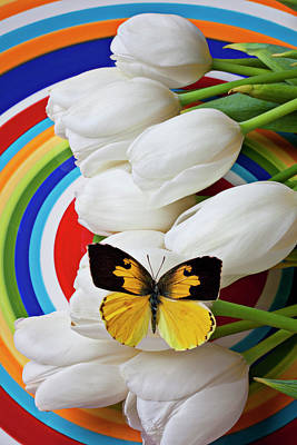 White Tulip Photograph - Dogface Butterfly On White Tulips by Garry Gay