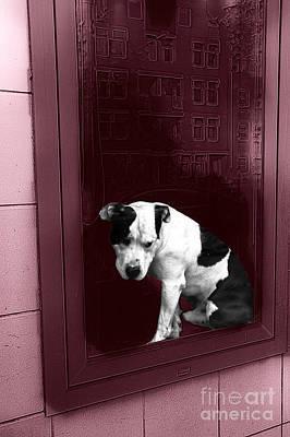 Pitbull Digital Art - Doggie In The Window Pop Art by John Rizzuto