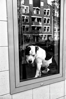Dog Pics Photograph - Doggy In The Window Mono by John Rizzuto