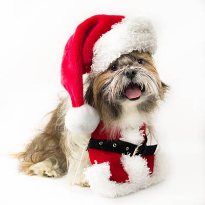 Doggy Santa Original by Lynne Albright