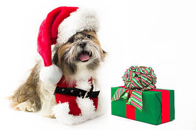 Doggy Santa With A Present Original by Lynne Albright