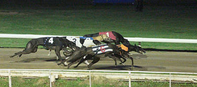 Dog Race Track Photograph - Dogs Racing by Tom Conway