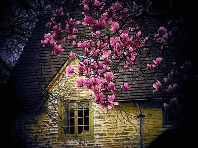 Dogwood By The Window Print by Joyce Kimble Smith
