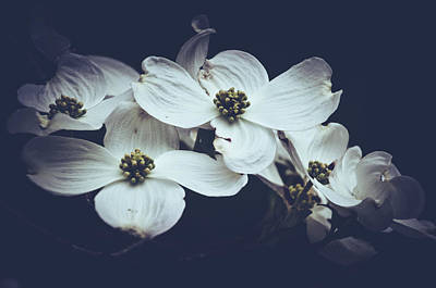 Photograph - Dogwoods Dressed In Darkness by Mother Nature