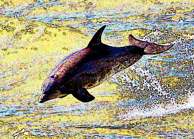 Dolphin Print by John Collins