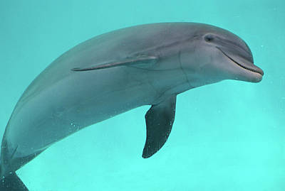 Dolphins Photograph - Dolphin by Sandy Keeton