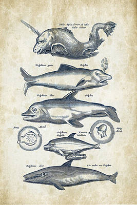 Dolphin Digital Art - Dolphins Historiae Naturalis 08 - 1657 - 42 by Aged Pixel