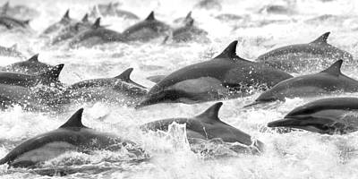 Dolphins On The Run Print by Steve Munch