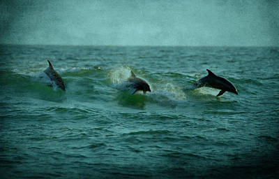 Dolphins Print by Sandy Keeton