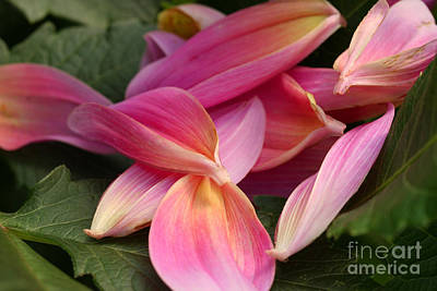 Photograph - Done Blooming by Steve Augustin