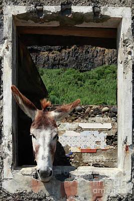 Donkey At The Window Print by Gaspar Avila